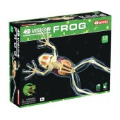 4D Full Skeleton Frog Anatomy Model