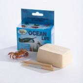 Mini Excavation Kit: Ocean Life - GeoCentral