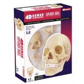 4D Exploded Human Skull Kit