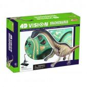 4D Vision Brachiosaurus Anatomy Model