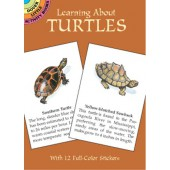 Learning About Turtles
